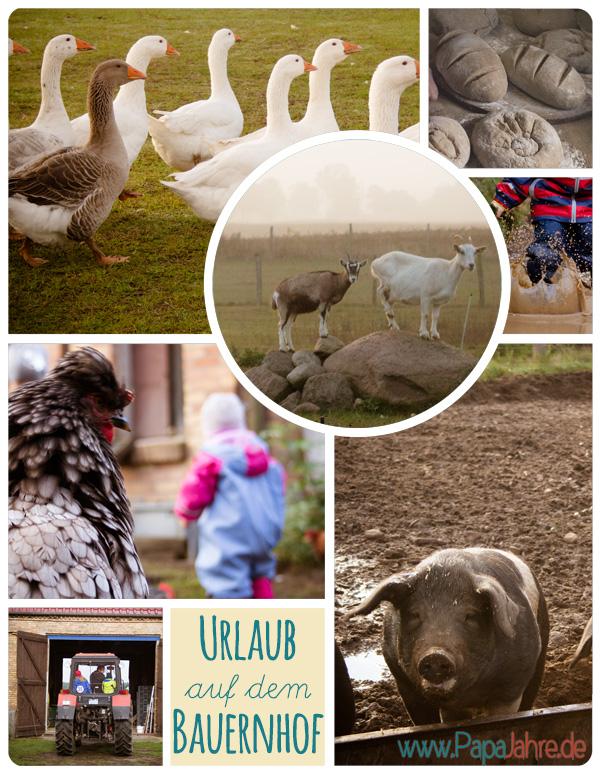Toller Urlaub mit Kindern auf einem Bauernhof in Brandenburg. Mit Schweinen, Ziegen, Hühnern und vielen mehr.