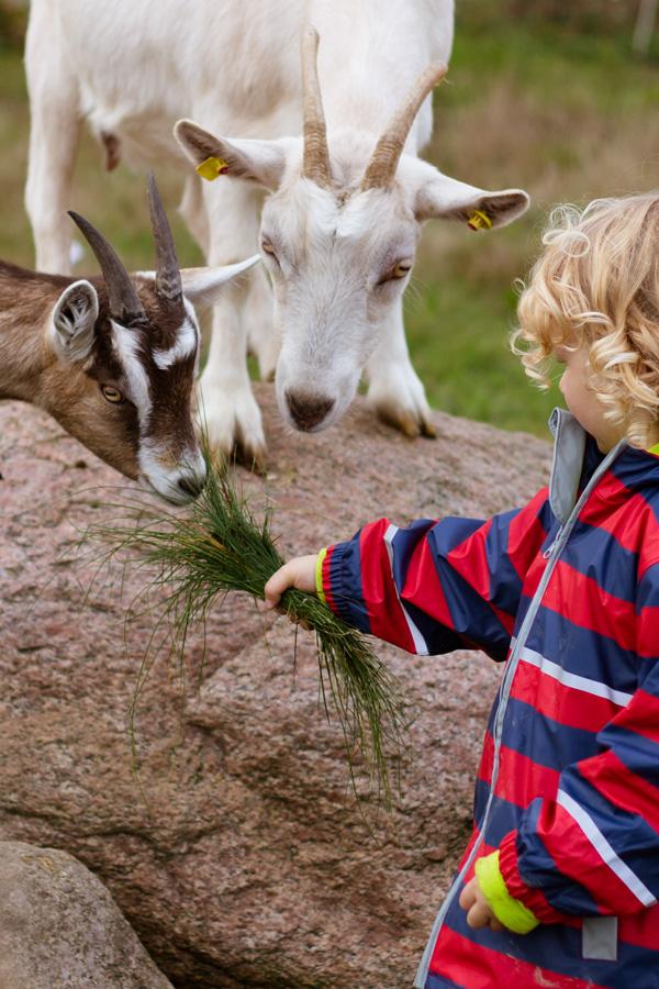 Auf dem Bauernhof im Urlaub mit den Kindern gab es auch Ziegen, die gefüttert werden konnten