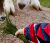 Urlaub auf dem Bauernhof – die Braunsberger Höfe