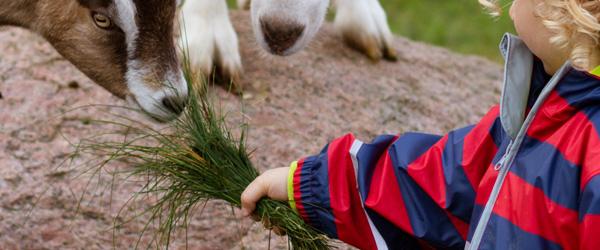Mit Kindern im Urlaub auf einen Bauernhof